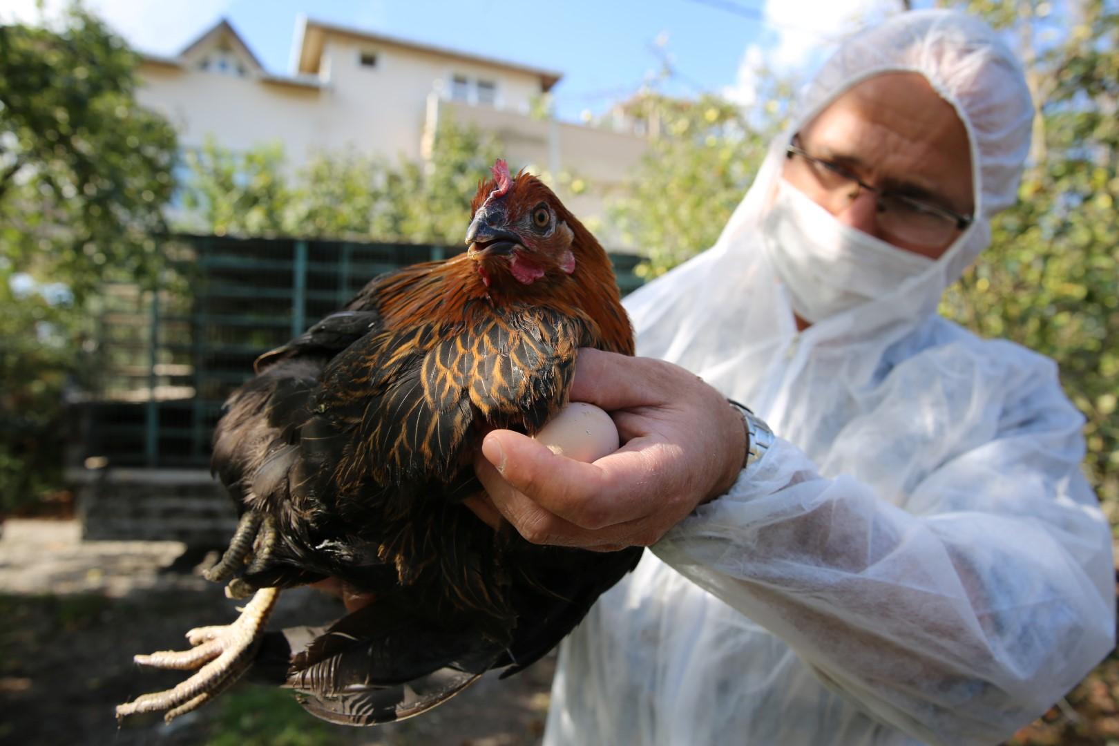 Kocaelili çiftçi, Büyükşehir'den 20 bin tavuk aldı