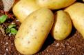 Torun, Tarım Bakanı'nın 'patates ve soğan' açıklamasını değerlendirdi