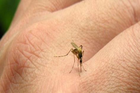 Sivrisinek ısırığı alerjisi ve korunma önlemleri